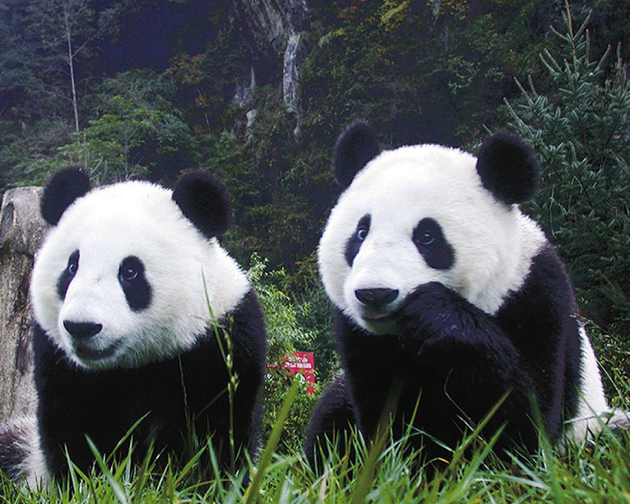 Animales y Animales » peligro de extincion