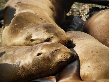 sea-lion-bundle